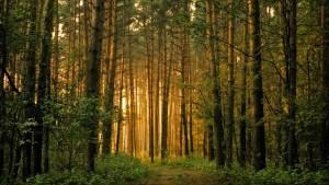 het SCIOS bos